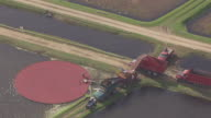 CU AERIAL View of man standing in flooded marsh sweeping up cranberries at farm / Cranmoor, Wisconsin, United States