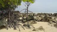 MS View of Mangrove plants at coast, hat chao mai marine national park / Ko Kradan, Trang, Thailand