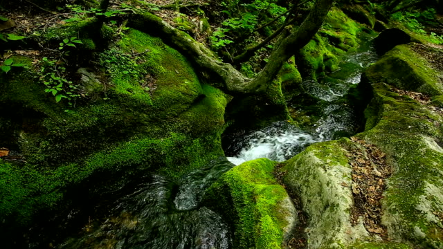View of moss valley in Geomnyongso Pond (Source of Hangang River which is the most significant river in Seoul) in Taebaek Mountain