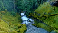 View of mossy forest river from Sahalie Falls McKenzie River Valley Oregon 26