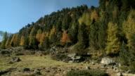 View of mountain creek in Tirol, Austria