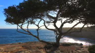 MS View of ocean through tree / S'Arenal, Mallorca, Balearic Islands, Spain