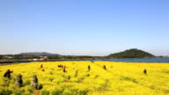 View of Oilseed Rape Flower field with Dolharubang(The traditional stone statues of Jejudo in old man shape) and Tourist