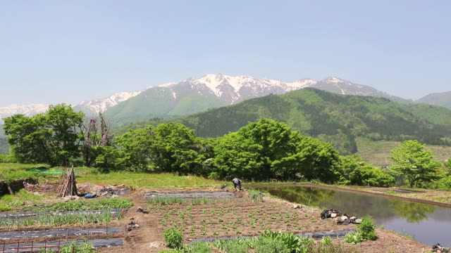WS View of Old woman farmer working at farm near World heritage / Shirakawa go, Gifu Prefecture, Japan