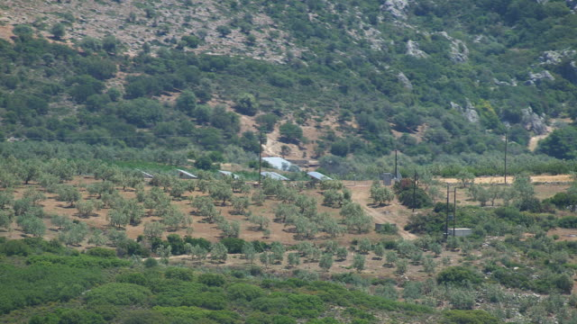 MS AERIAL View of olive grove / Peloponnese, Greece