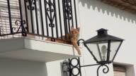 MS View of One cat relaxing in balcony side by lamp mountain village Mijas / Mijas, Andalusia, Spain