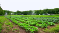 WS SLO MO PAN View of organic farm with irrigation sprinklers / Chatham, Michigan, United States