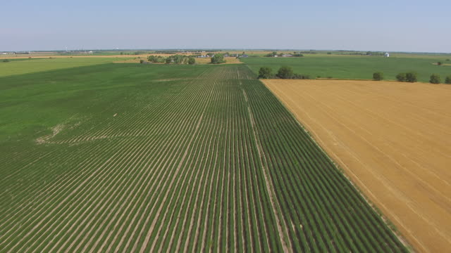 WS AERIAL View of Over crop rows and approaching building northeast of Red Cloud / Nebraska, United States