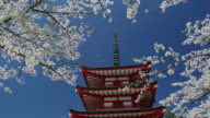 MS View of pagoda with cherry blossom trees / Shimo Yoshida, Yamanashi, Japan