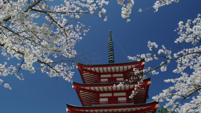 MS View of pagoda with cherry blossom trees / Shimo Yoshida, Yamanashi, Japan