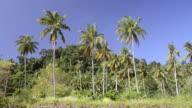 WS View of Palm tree plantation in front of jungle / Ko Hai, Krabi, Thailand