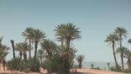 MS ZO View of Palms in desert / M'hamid, Zagora, Morocco