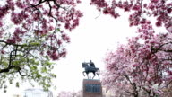 View of park, statue and magnolia blossoms