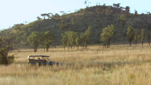 WS View of Parking vehicle with lions lying in long grass, Pilanesberg Game Reserve / North West Province, South Africa