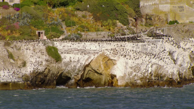 WS AERIAL View of Pelicans flying and land on Alcatraz Island / San Francisco, California, United States