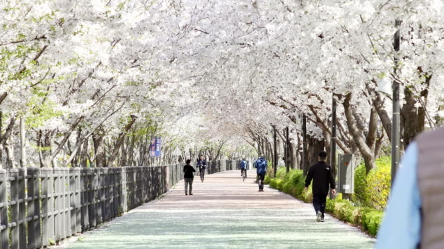 View of people enjoying cherry blossom at Seoul Children's Grand Park