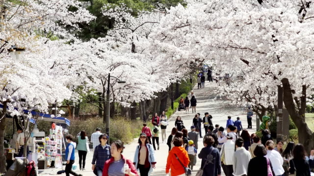 View of people enjoying cherry blossom street at Seoul Children's Grand Park