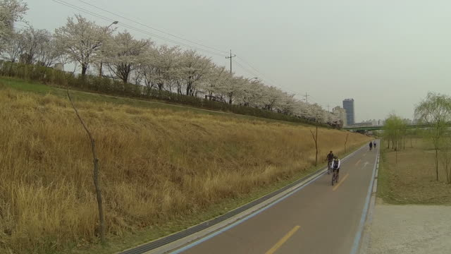 View of people riding bicycle with cherry blossom in Yangcheongu area
