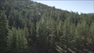 AERIAL A view of pine trees in a forest / Frazier Park, California, United States