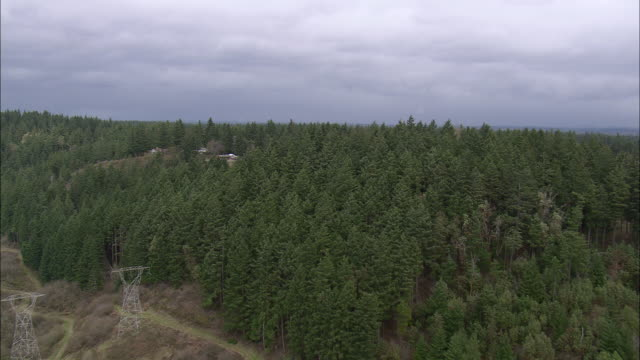 WS AERIAL View of pine trees with houses / Washington, United States
