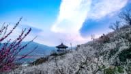 View of plum blossoms and Palgakjoeng (Pavilion) at Maehwa Vilage (Popular tourist destinations)