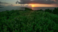 WS T/L View of Prickly pear cactus in Wolryung ridge at sunrise / Jeju, Jeju-do, South Korea