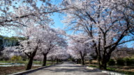View of promenade with Cherry blossom trees
