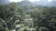 WS POV View of rainforest in Malaysia