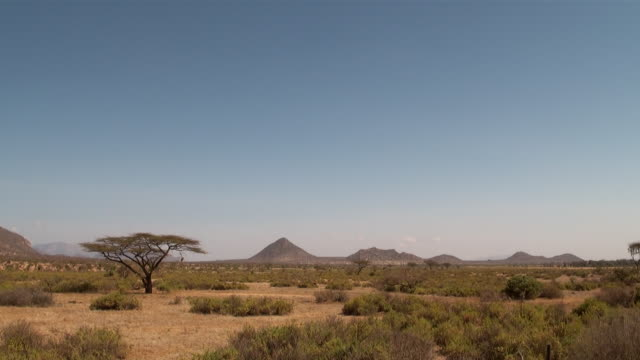 WS View of Samburu landscape savanna with acacia trees and old volcanoes AUDIO / Samburu, Rift Valley, Kenya
