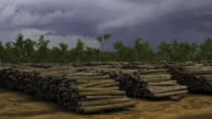 WS T/L ZO View of sawn logs wIth clouds moving in sky / Darwin, Northen Territory, Australia