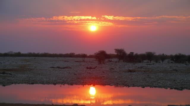 WS View of Scenic landscape with birds at sunset / Etosha National Park, Namibia
