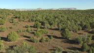 WS AERIAL View of scrubs in desert / Sedona, Arizona, United States