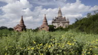 WS LA View of Shwegugyi Pagoda in flowering field / Bagan, Mandalay Division, Myanmar