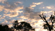 WS T/L LA View of silhouette of trees against sky / Western Cape, South Africa