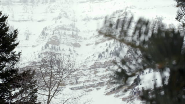 View of snow  covered cliffs on mountain past pine tree branches.