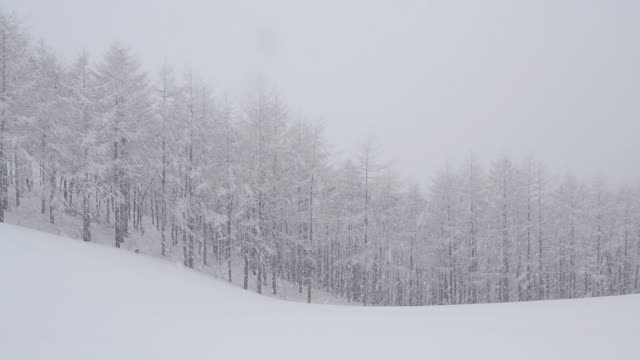 WS View of Snow scene of Daegwallyeong area( a mountain pass in the Taebaek Mountains of eastern South Korea) / Pyeongchang, Gangwondo, South Korea