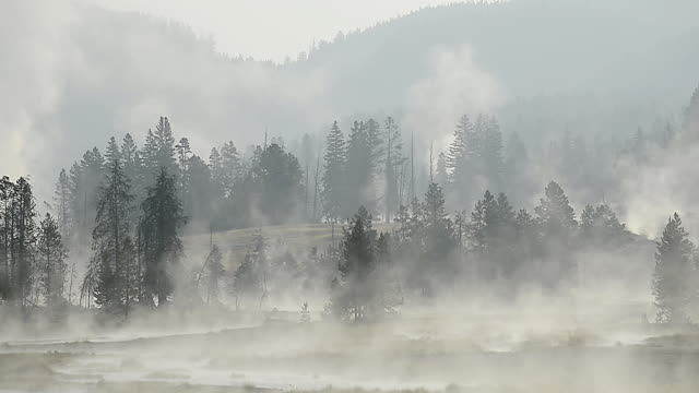 WS View of steam from hot springs rising at morning, UNESCO World Heritage Site, Firehole Lake Drive, Yellowstone National Park / Yellowstone, Wyoming, United States