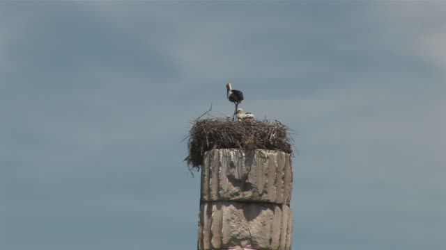 MS View of stork nest on top of column / Ephesus, Selcuk, Celsus library, Ägais province, Turkey