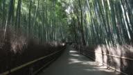 WS View of straight road passing through bamboo forest / Arashiyama, Kyoto, Japan