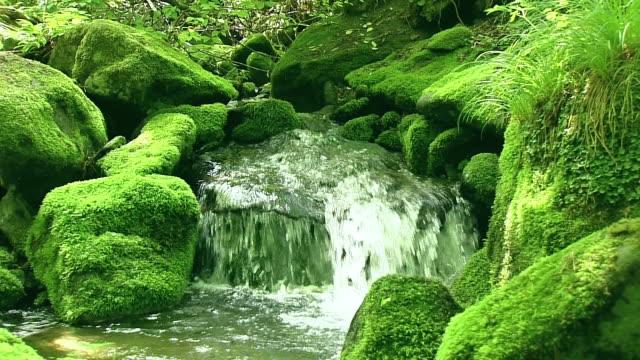CU View of stream and moss on rock in Hambaeksan mountain / Donghae, Gangwondo, South Korea