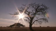 WS T/L View of sun setting behind tree on savanna / Lindberg, North west, South Africa