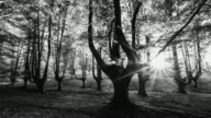 WS T/L View of sun shining behind trees in forest of Natural Park / Gorbeia, Bizkaia, Basque Country, Spain