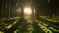 WS View of sunbeams in forest with shining sun / Serrig, Rhineland Palatinate, Germany