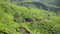 WS View of Tea Plantation / Munnar, Kerala ,India