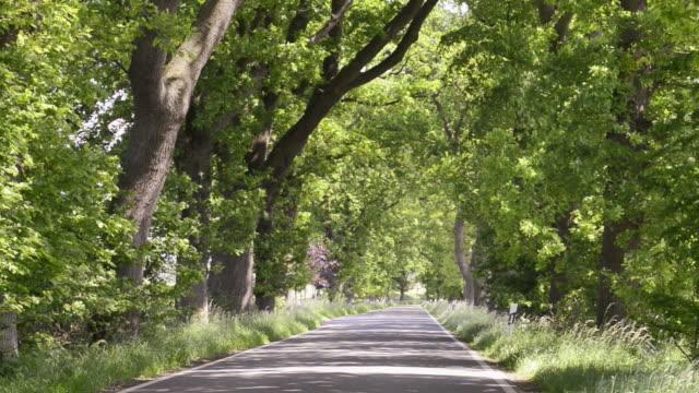 WS View of tree avenue, German Avenue Road / Put bus, Rugen / Mecklenburg Western Pomerania, Germany