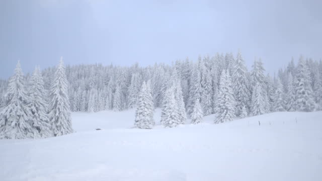View of trees covered with snow during winter