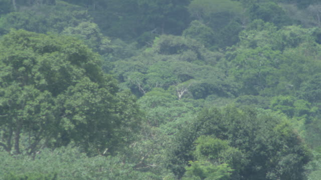 WS View of trees in tropical forest / Buikwe, Uganda