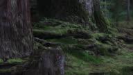 MS View of trunk of tree in which alga grew / Kouya, Wakayama, Japan