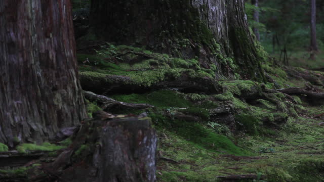 MS View of trunk of tree in which alga grew / Kouya, Wakayama, Japan