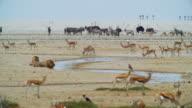 WS View of Various animals near waterhole / Etosha National Park, Namibia